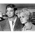 Birds Rod Taylor Tippi Hedren Photo